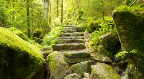 Germany's Black Forest: Black Forest Stairway