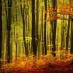 Black Forest Undergrowth