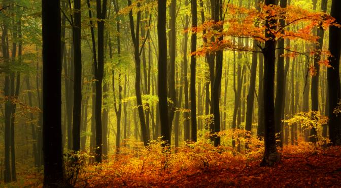 The Black Forest: Hikes, Drives and Adventure in Germany's Nature Park