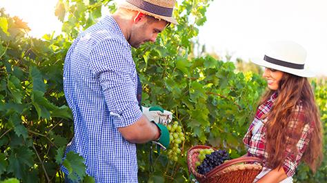 Vineyard Couple_France