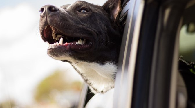 Pet-Friendly Holidays: How to Travel with Your Furry Friend via Ferry