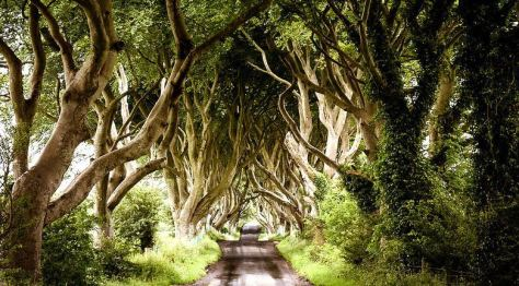 The_Dark_Hedges