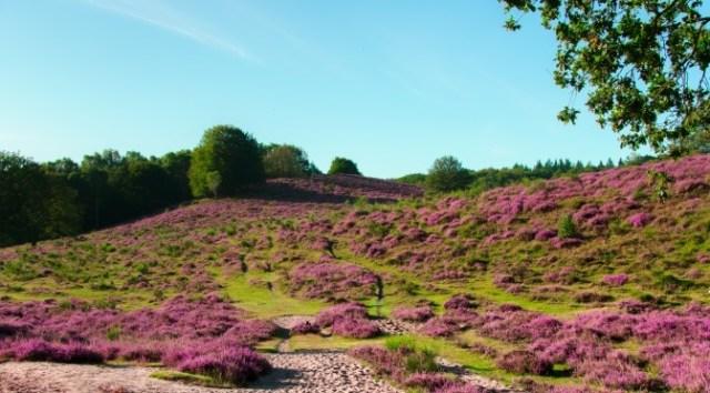 National Parks of The Netherlands: Posbank, Veluwezoom National Park