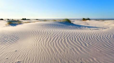 Meijendel Sand Dunes
