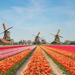 Pantone Colour of the Year in Holland