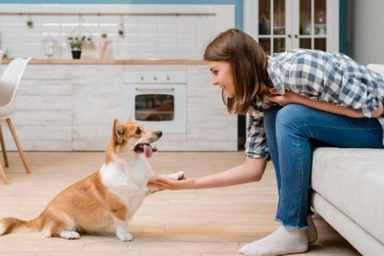 cachorro em apartamento treinamento