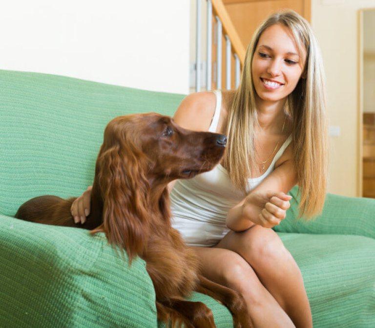 cuidados com cachorro em apartamento