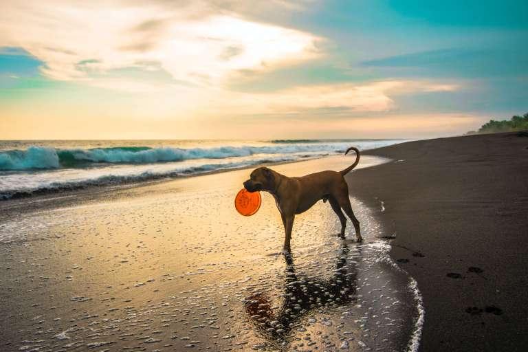cuidados com o cachorro na praia verifique o destino pet friendly