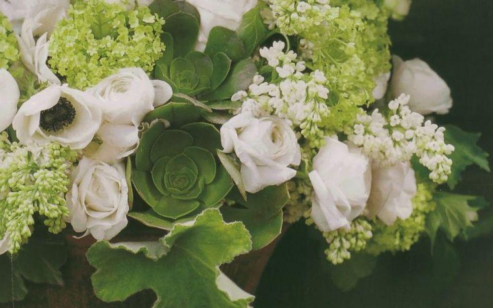 succulent st patricks