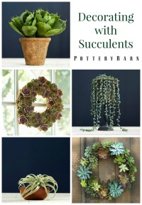 Decorating With Succulents - Pottery Barn