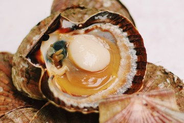 nettoyer coquilles saint jacques