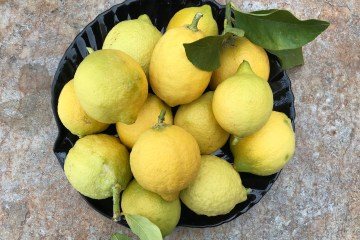 citron feminnello