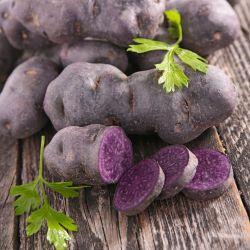 pommes de terre violet Queen