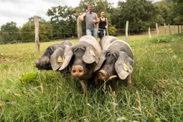 porc kintoa basque tout savoir sur cette race rustique
