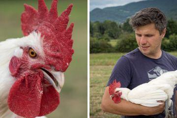 Olivier de la Grange Renaud et son élevage de volailles de Bresse