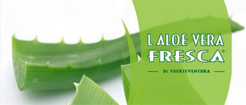 aloe vera fresca - pranaloé boutique de cosmétiques bio en ligne