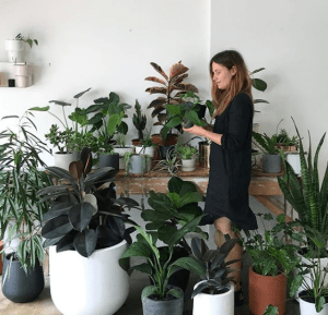 EMMA SADIE THOMPSON - indoor plant styling tips
