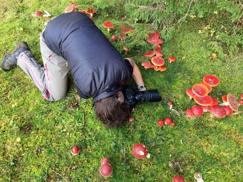 Alison Pouliot crouched on green ground photographing red mushrooms