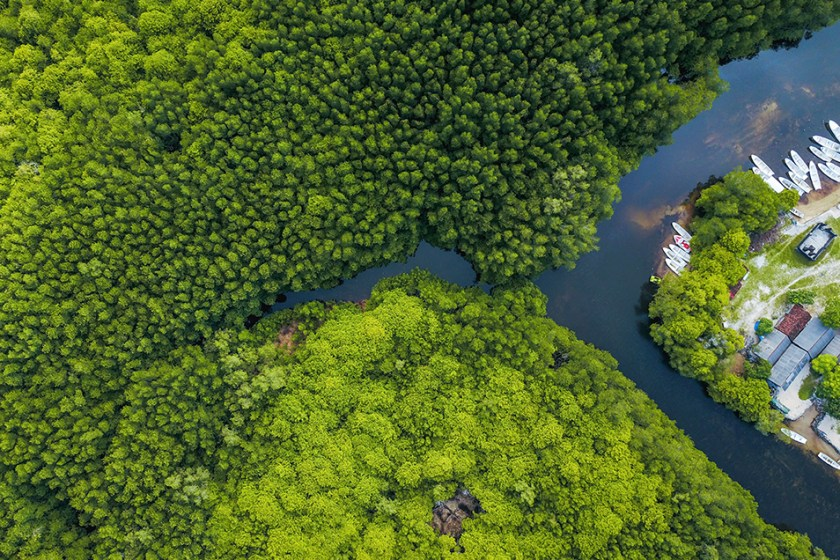 Aerial photo of mangroves with river and boats