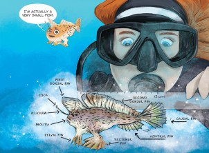 An illustrated page from Hold On! Saving the Spotted Handfish featuring an illustration of a spotted handfish in the ocean being inspected by a scientist in scuba gear. Scientific label on the handfish point out the physical features of the handfish.