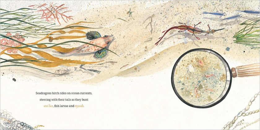 A spread from The Way of the Weedy Seadragon, featuring a detailed illustration of the ocean floor, showing a weedy seadragon and another fish moving with the currents. A illustration of a magnifying glass over the sand shows a close up of sea lice, fish larvae and mysids.