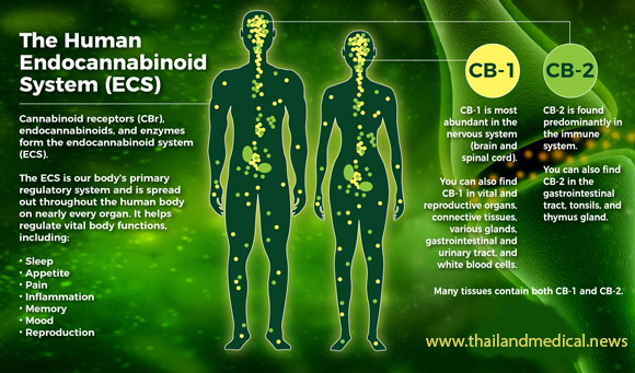 What Does CBD Feel Like and How It May Impact Your Life