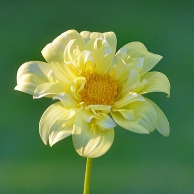 花粉症か副鼻腔炎か
