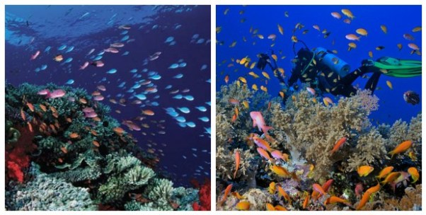 coral reefs pics