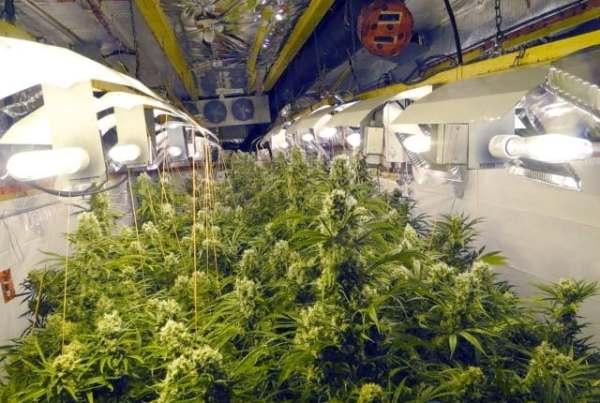 Marijuana Facility