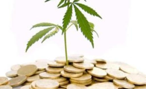 Cannabis Investment