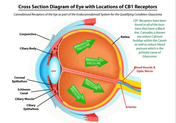Glaucoma and Medical Cannabis