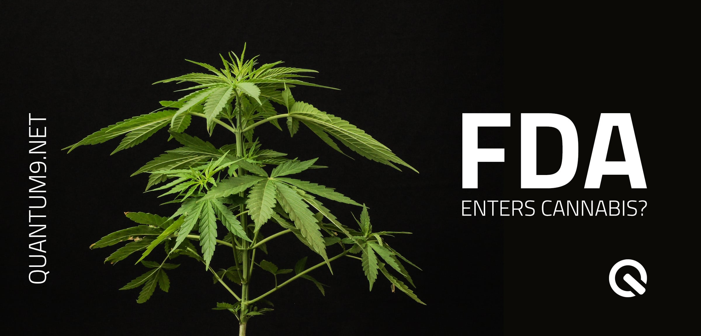 FDA Enters Cannabis