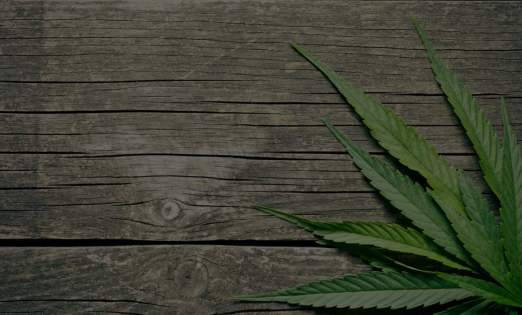 Cannabis Letter of Recommendation