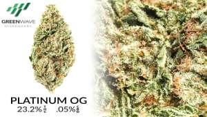 OG Kush marijuana strains