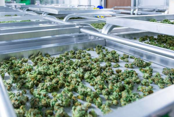 investing in cannabis