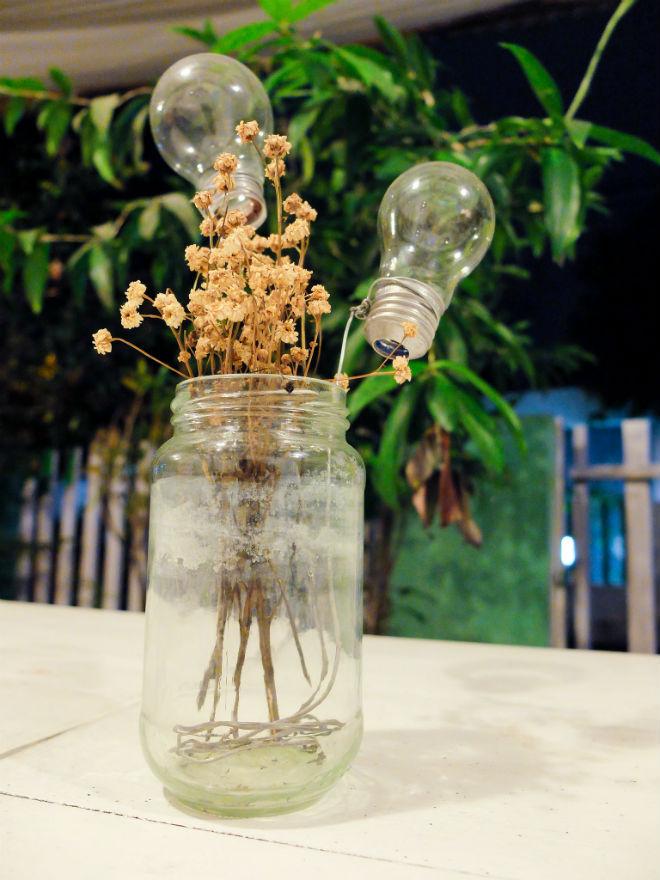 Bunga Lampu (Plenthongicus baciroensis)