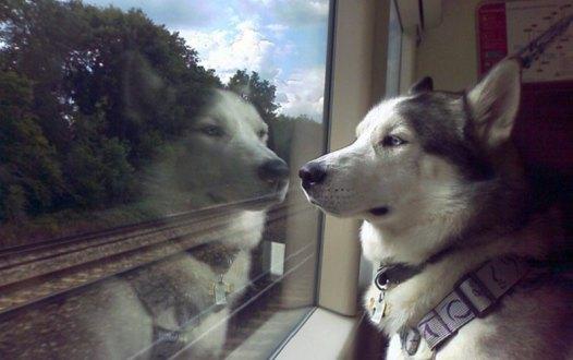 Algún día nuestra mascota nos podrá acompañar en transporte público