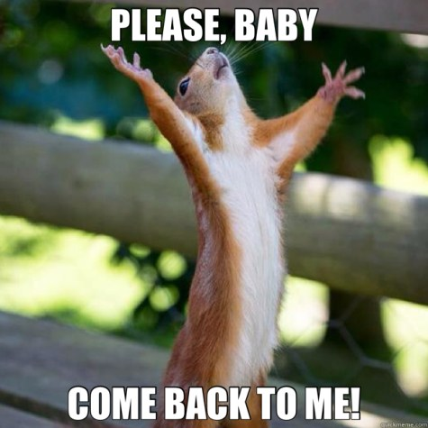 Please Come Back To Me Squirrel Meme