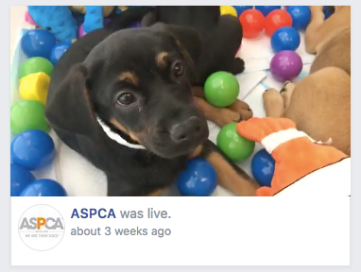 visual trends facebook live aspca example