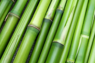Fibra de bambú