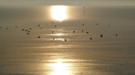 Wattenmeer mit Zugögel