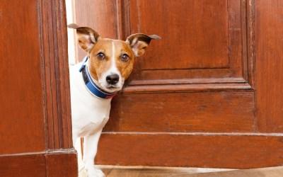 ¿Cómo ayudar a mi mascota a adaptarse a un nuevo hogar?