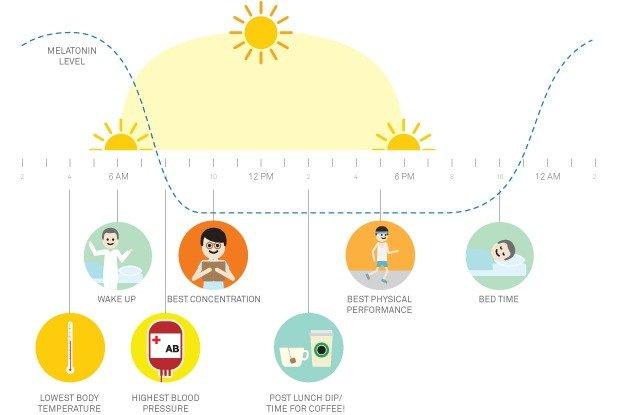 Gestão do tempo - ritmo circadiano