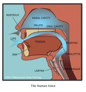 How the Voice Works – Resonance Voice Training