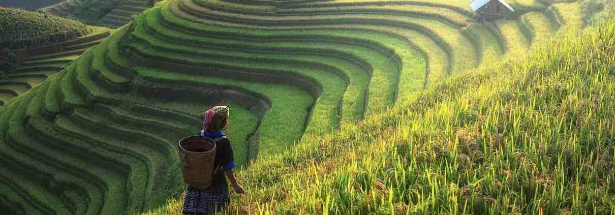 Farmer standing in terraced rice field