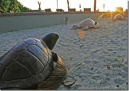 Seashell_Suites_Turtles