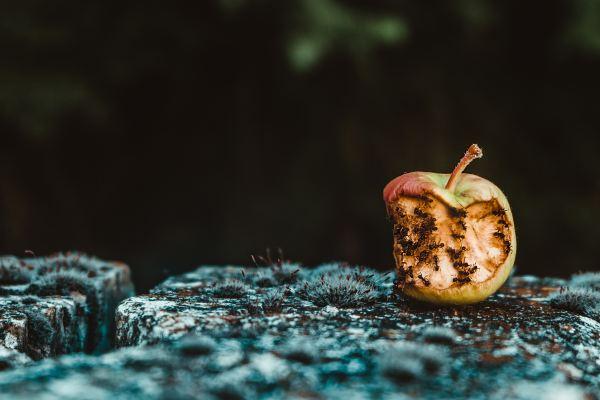 EcoBot II image of rotten fruit