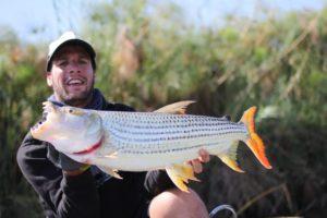 Comportement du Tigerfish