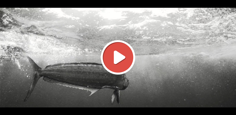 vidéo de pêche juin 2020