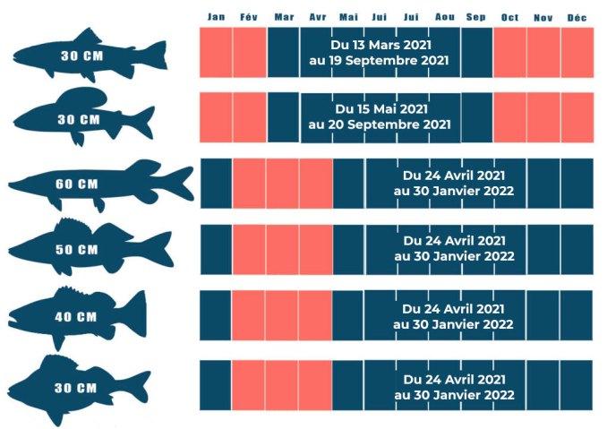 Dates d'ouverture de la pêche 2021 : Récapitulatif des dates d'ouverture de la pêche et tailles de capture au niveau national